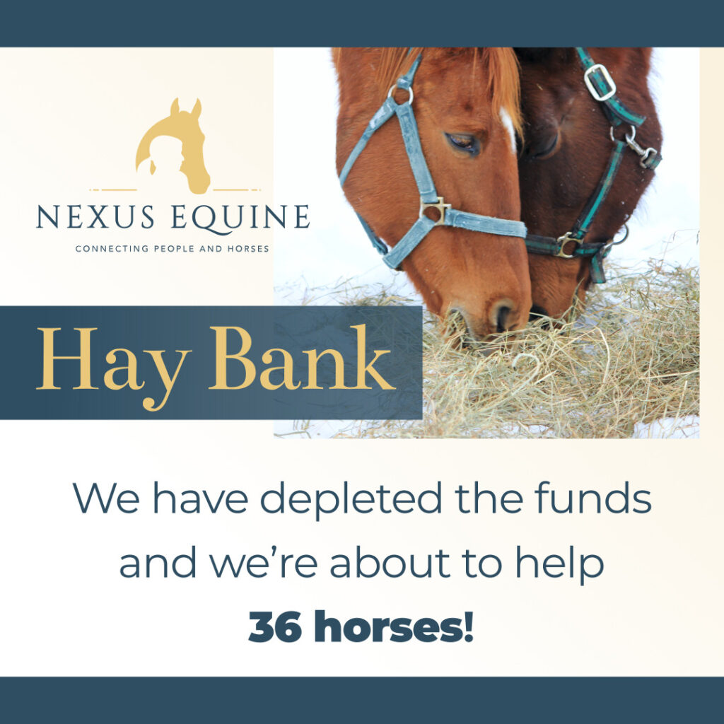 We have depleted the funds and we're about to help 36 horses!