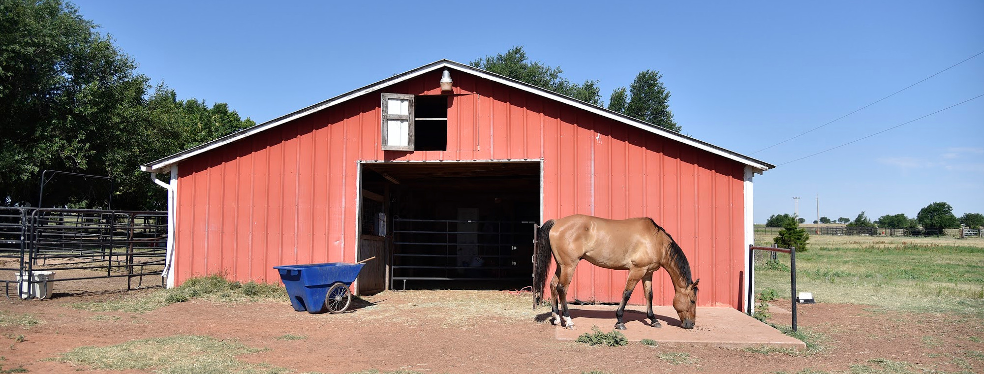 A brown horse stands in front of a red barn.